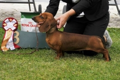 CLUB SHOW ROMA '16 3BIS PUPPY
