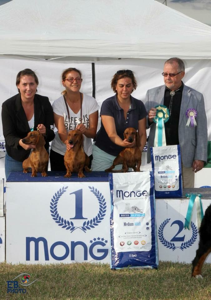 NDS ROMA BEST IN SHOW GROUP
